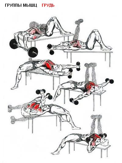 Форум по Бодибилдингу * Просмотр темы - Качаем мышцы правильно (фото) .