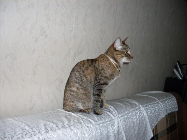Котёнок-подросток ищет семью! I-163