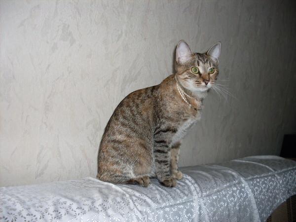 Котёнок-подросток ищет семью! I-164
