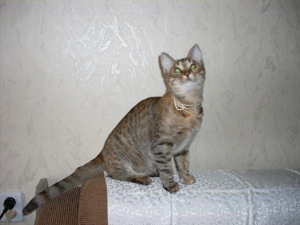 Котёнок-подросток ищет семью! I-168