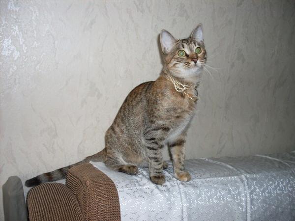 Котёнок-подросток ищет семью! I-170