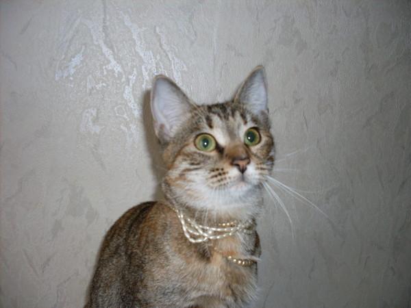 Котёнок-подросток ищет семью! I-171