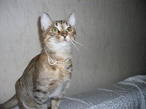 Котёнок-подросток ищет семью! I-172