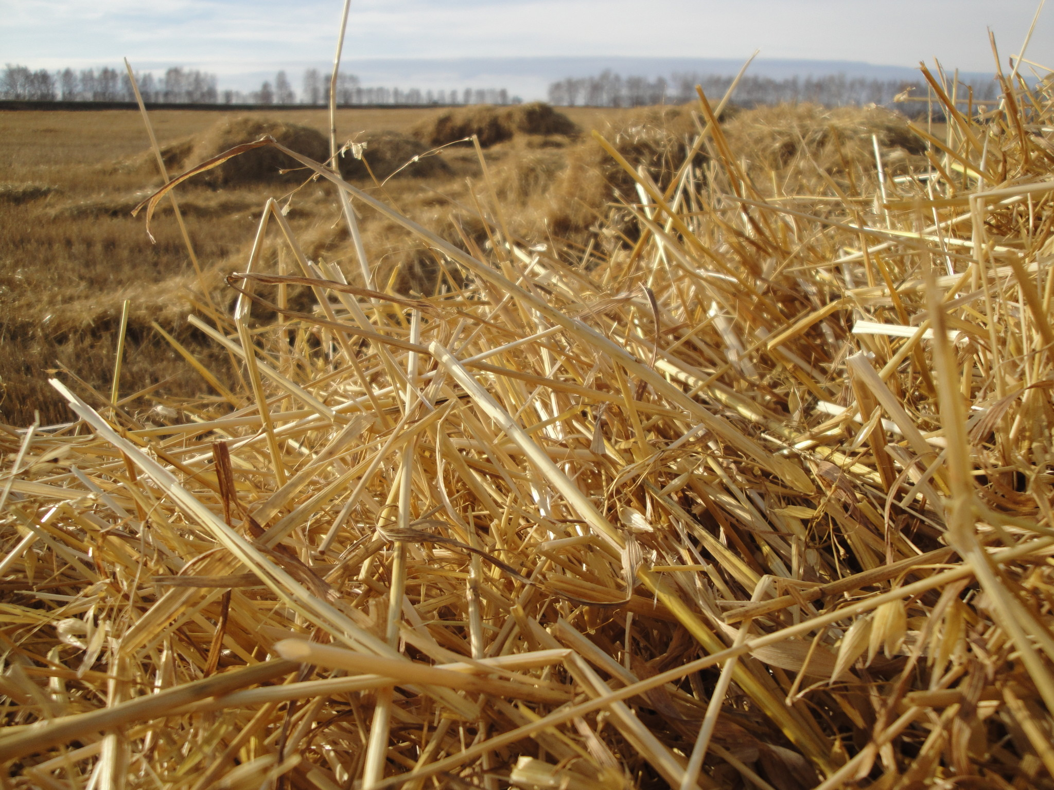 Фермер сеновал грудастая 23 фотография