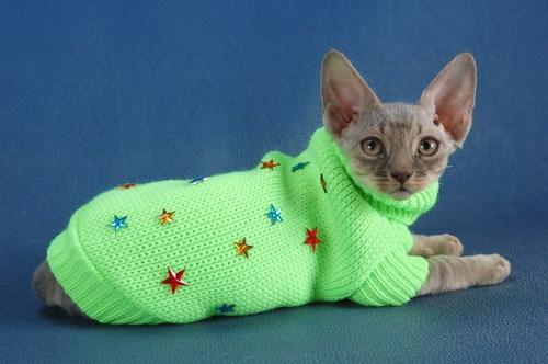Одежда для кошек своими руками фото