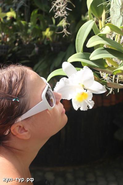 орхидеи тайланд нунг нуч