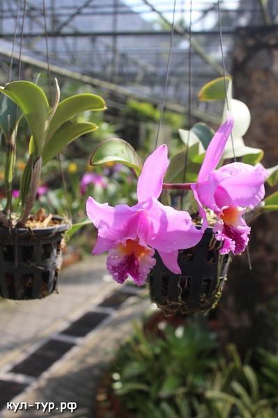 нунг-нуч парк орхидей