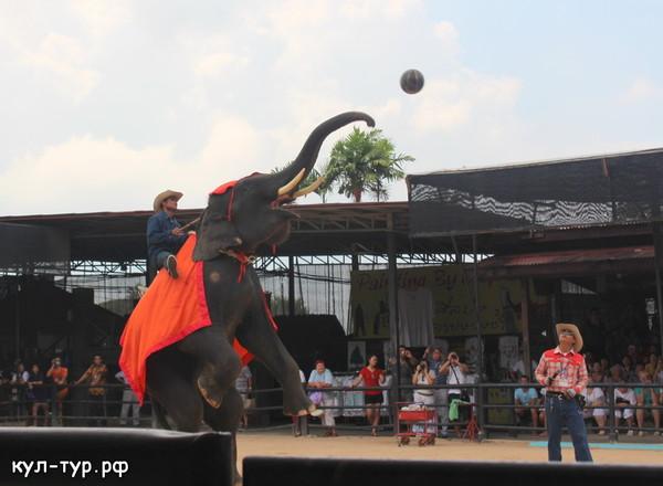 шоу слонов нонг нуч
