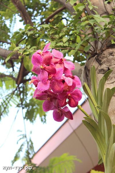 орхидеи живые