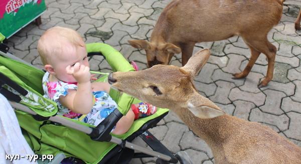 ребёнок кормит оленей детский зоопарк