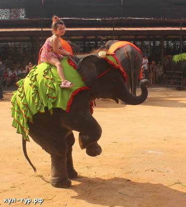 верхом на слоне