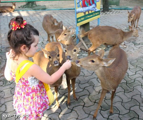 дети кормят оленей с рук