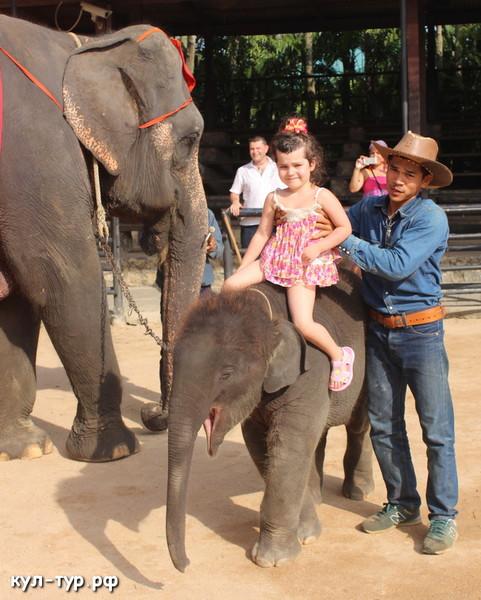 покататься на слонике