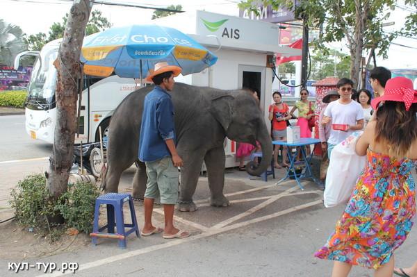 слоны тайланда паттайя