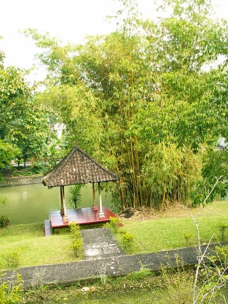 парк бамбука