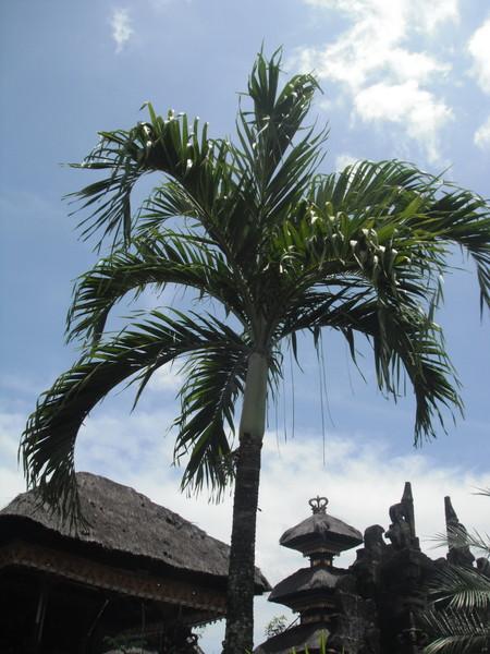 Убуд пальма