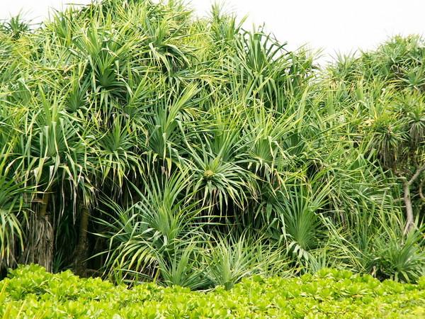 пальмы Парк Бали