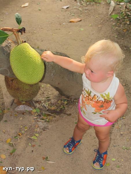 ребёнок ест джет фрукт
