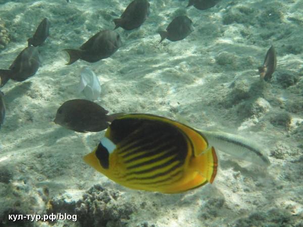 рыбы в египте