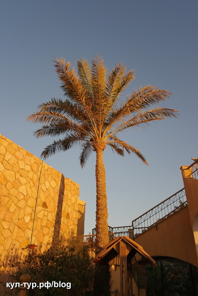 солнце египта