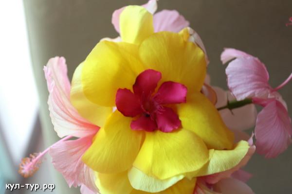 цветы к дню рождения