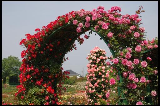 Цветочные арки. Идеи ЗДЕСЬ