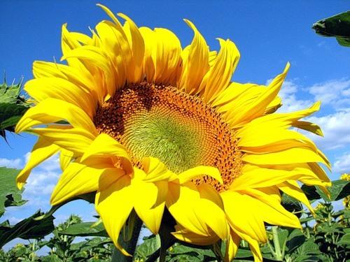 http://content.foto.mail.ru/mail/raduga.54/_blogs/i-17044.jpg