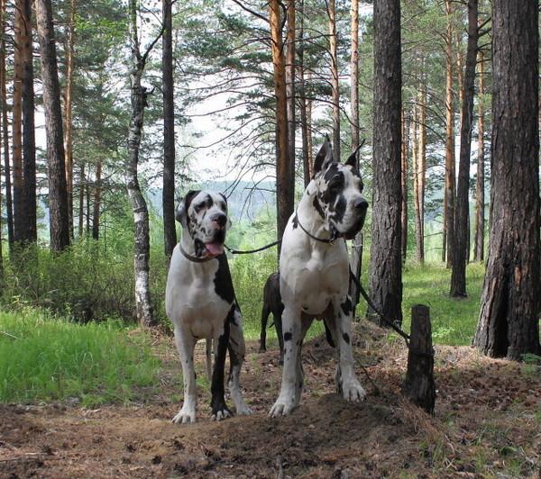 http://content.foto.mail.ru/mail/rassypi/288/i-296.jpg