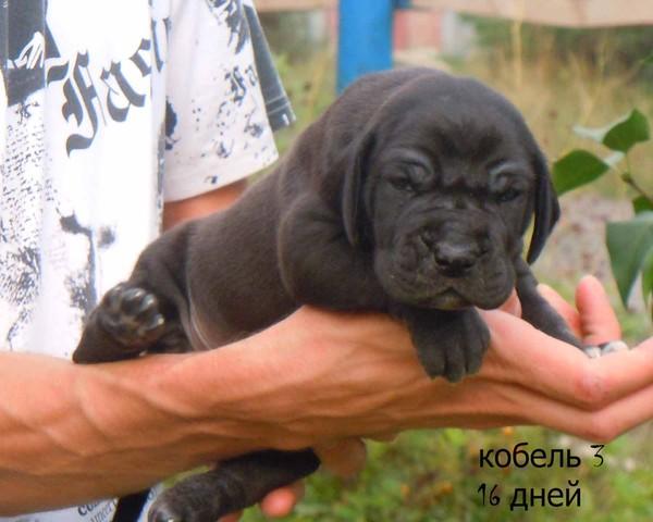 http://content.foto.mail.ru/mail/rassypi/299/i-346.jpg