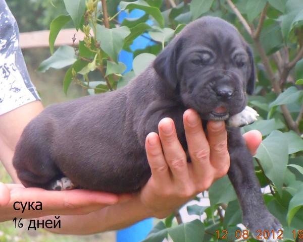 http://content.foto.mail.ru/mail/rassypi/299/i-349.jpg