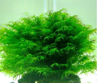 Заказ растений I-321