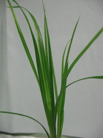 Растения для террариумов, палюдариумов, флорариумов и т.п. I-500