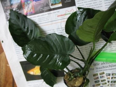 Заказ растений I-358
