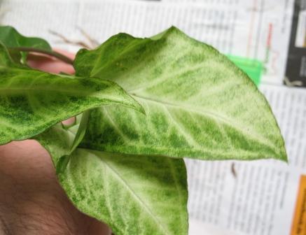 Заказ растений I-403