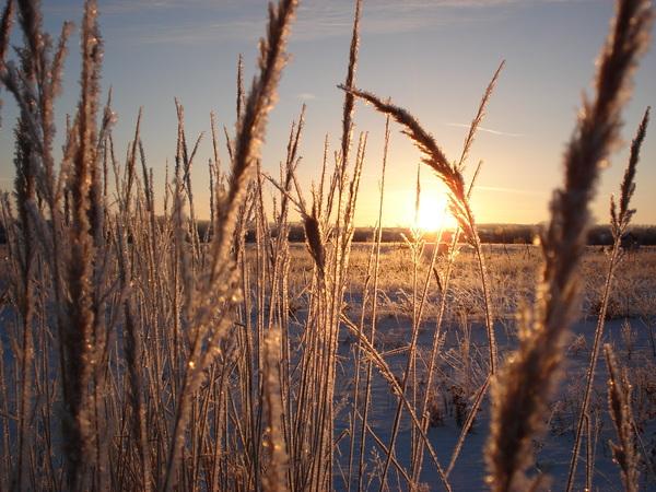 фото Енина Николая,1 поле