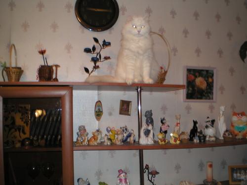 http://content.foto.mail.ru/mail/roz_elena/2/i-56.jpg