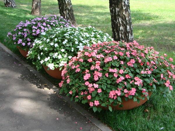 После посадки цветов в вазонах