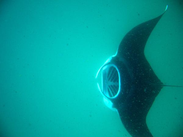 http://content.foto.mail.ru/mail/rybafish.bonele/httpdiverphotomailru/i-58.jpg