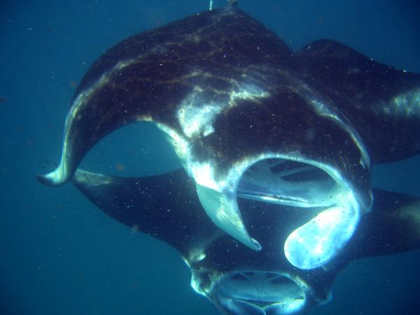 http://content.foto.mail.ru/mail/rybafish.bonele/httpdiverphotomailru/i-61.jpg
