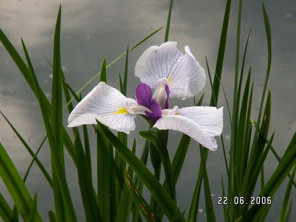 http://content.foto.mail.ru/mail/saruman55/_blogs/i-174.jpg