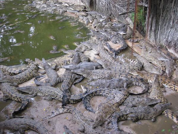 Вальер на крокодиловой ферме.