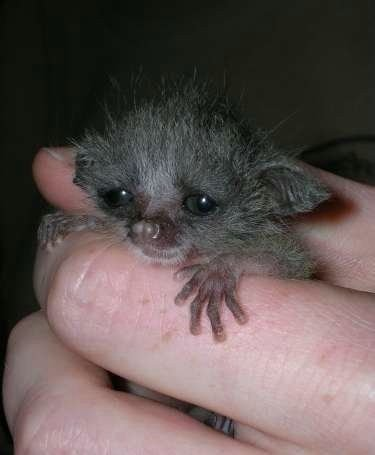 Котоматрица: не мышонок,не лягушка, а неведома зверюшка тихо в дом ко мне вошла, и всё...