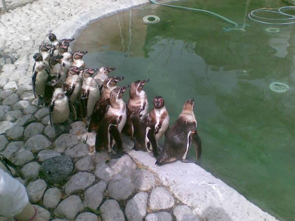 В зоопарке продолжают гибнуть животные