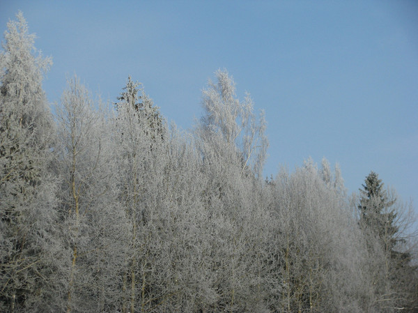 http://content.foto.mail.ru/mail/shel1983/04-14-12-d1/i-56960.jpg