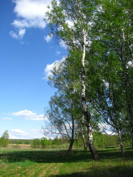 http://content.foto.mail.ru/mail/shel1983/09_05_11/i-52073.jpg