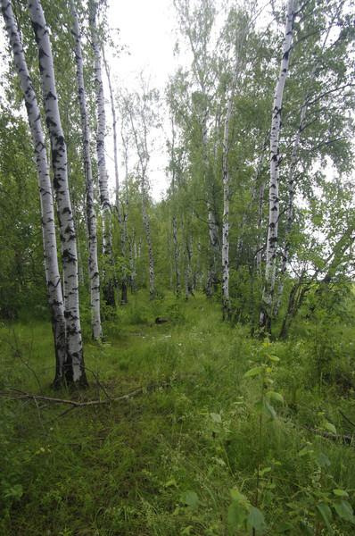 http://content.foto.mail.ru/mail/shel1983/15-17_06_12/i-59576.jpg