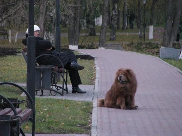 http://content.foto.mail.ru/mail/shel1983/17-30_10_10/i-43633.jpg