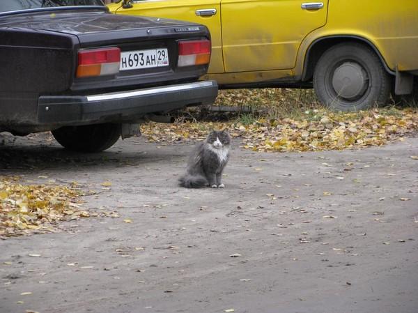 http://content.foto.mail.ru/mail/shel1983/17-30_10_10/i-43736.jpg