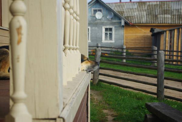 http://content.foto.mail.ru/mail/shel1983/18_09-02_10-11-3/i-54826.jpg