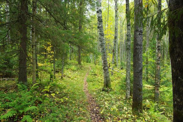 http://content.foto.mail.ru/mail/shel1983/18_09-02_10-11-4/i-55138.jpg